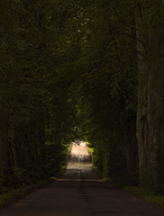 Magical road in the old forest