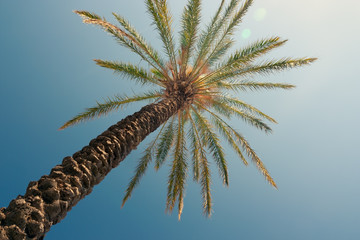 Tropical palm tree against a clear blue sky at beautiful day.