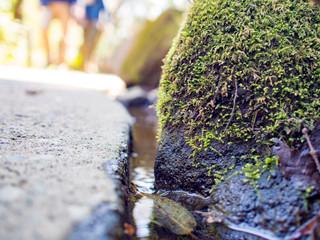 苔石と流れる水