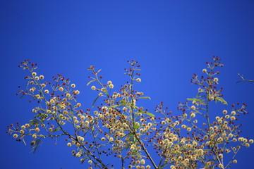 FLOWER on blue sky