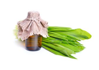 Allium ursinum – known as ramsons