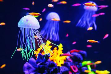 Beautiful colorful jellyfish in aquarium Wall mural