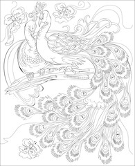Black and white page for coloring. Fantasy drawing of peacocks couple. Worksheet for children and adults. Vector image.