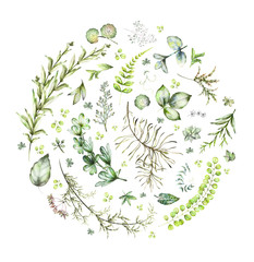 round composition with watercolor elements - herbs, leaf.  garden and wild plants, leaves, branches, illustration isolated on white background with eucalyptus, exotic, tropical leaf. Green organic