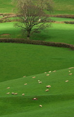 Wall Mural - Farmland in Blackdown Hill AONB (Area of Outstanding Natural Beauty) in Devon, England