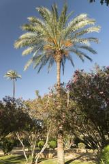 Sevilla (Andalucia, Spain): garden