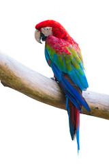 Fototapete - macow bird