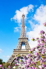 Acrylic Prints Eiffel Tower Eiffel Tower in sunny spring day with magnolias in Paris, France