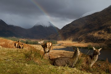 Group of deer on grassy landscape against mountain