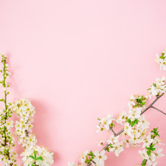 Spring flowers on pink background. Flat lay, top view. Floral background.