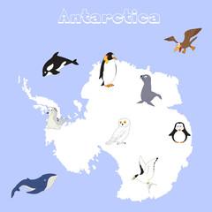 Fauna of Antarctica. Set of cartoon polar animals for babies and kids