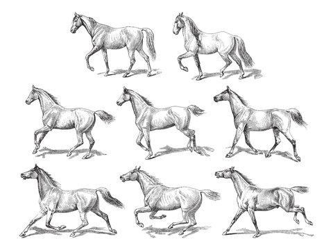 Horse collection / vintage illustration