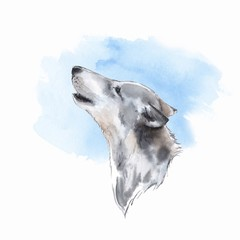 Wolf . Watercolor illustration. Blue background
