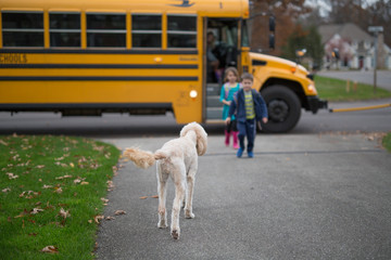 Children and dog greeting each other after getting off bus