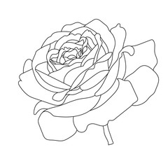 Flower rose vector outline icon. Creative Luxury Fashion logotype concept icon. Vector.