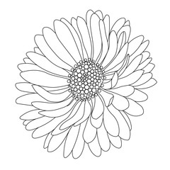 Monochrome, black and white aster flower isolated on a white background. Vector.