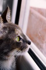 Retrato de un precioso gato gris doméstico