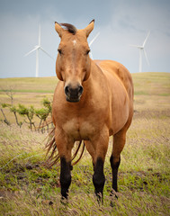 Breezy Horse in front of Wind Turbines