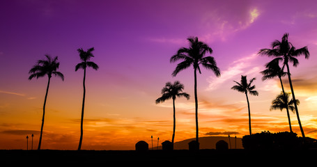 purple sunset with palm trees