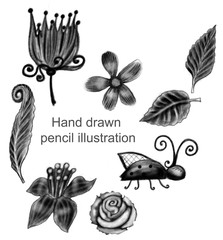 Hand drawn set of flowers and leaves on the white background, isolated illustration painted by pencil