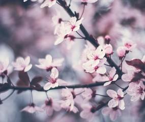 Blossom tree nature spring flower background