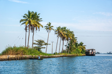 Palm trees taken on the backwaters