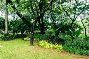 Beautiful green city park with various kind of plant and flower photo taken in Jakarta Indonesia