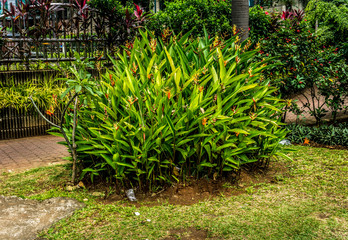 Green bushes in a garden with red flower photo taken in Jakarta Indonesia