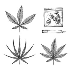 Hand drawn vintage vector illustrations - Medical cannabis (Indica, ruderalis, sativa). Marijuana sketch. Perfect for invitations, greeting cards, posters, prints