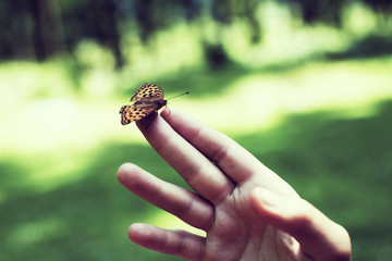 Beautiful butterfly sitting on the girl hand. Butterfly flew in and sat on the girl