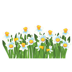 Green grass with blue narcissus flowers isolated on white. Vector illustration