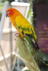 beautiful of colorful parrot bird