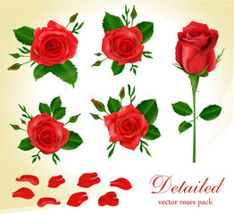 Detailed realistic red roses collection.