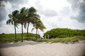 Beach Landscape in Miami Florida