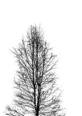 Silhouette tree branches outline vector.