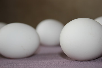 White eggs on a purple background