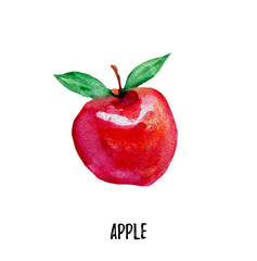 apple illustration. Hand drawn watercolor on white background.