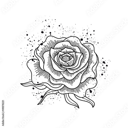Black and white rose flower isolated paint splashes - Rose noir dessin ...
