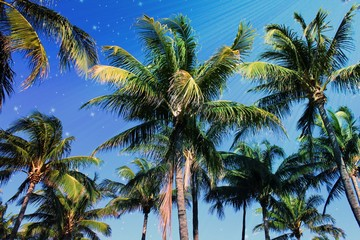 Green Palm Trees and Stars in South Beach, Florida Background
