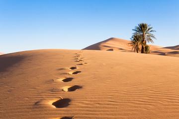 palmiers dans le désert et empreintes de pas