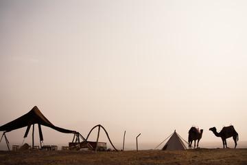 chameaux dans le désert dans un camp
