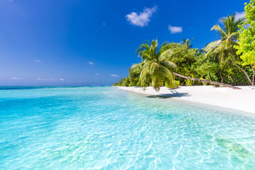 search photos tropical beach background