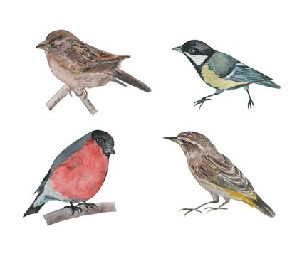 Set of watercolor birds. Hand drawn illustration on white background