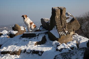 Ruinenfeld im Winter mit Hund (Stuttgart)