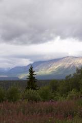 Summer on Haines Highway, Yukon Territory, Canada