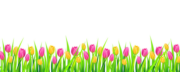 Spring background banner with colorful tulips. Vector illustration.
