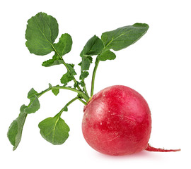 Fresh radishes isolated