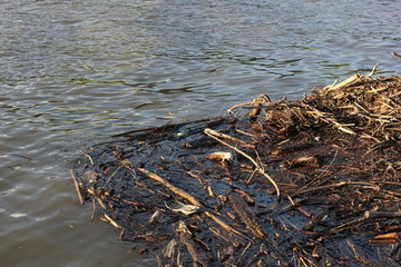 Wood debris floating in water