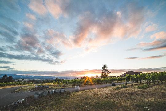 Colorful Vineyard Sunset
