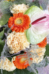 Fototapete - Flower background with gerbera and carnation flowers.